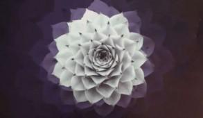 Foto: Album Cover